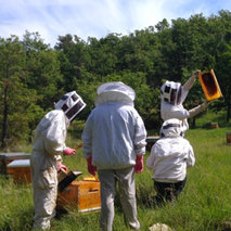 Restoring bee populations in France