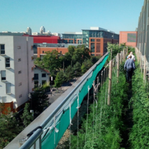 Creating urban-agriculture jobs in France